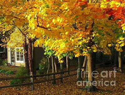 Photograph - Autumn At Bayberry Cottage  by Nancy Patterson