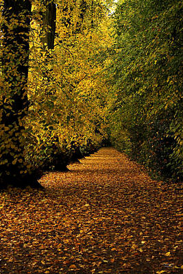 Photograph - Autumn Avenue by Sarah Broadmeadow-Thomas