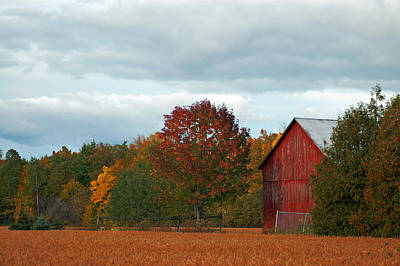 Autumn Barn Art Print by Cheryl Cencich