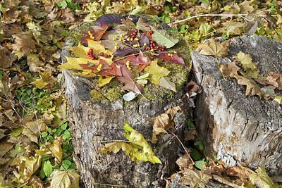 Autumn Berries And Leaves  Art Print by Aleksandr Volkov