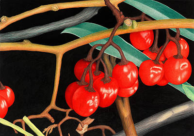 Fruit Colored Pencil Drawing Painting - Autumn Berries by Norm Holmberg