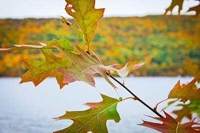 Photograph - Autumn Bliss by Sara Frank