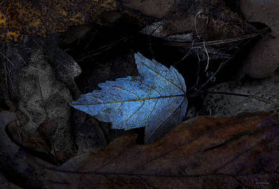 Ron Jones Photograph - Autumn Blue by Ron Jones