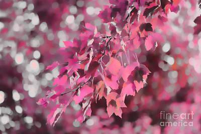 Photograph - Autumn Blush by Jeff Breiman