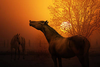 Animals Royalty-Free and Rights-Managed Images - Autumn Breeze by Joachim G Pinkawa
