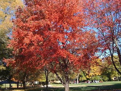 Photograph - Autumn Brilliance In The Park by Barbara Plattenburg
