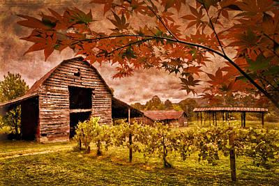 Blue Grapes Photograph - Autumn Cabernet by Debra and Dave Vanderlaan