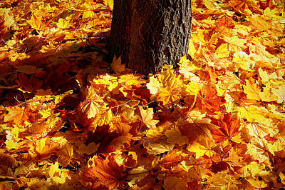 Photograph - Autumn Carpet by Linda Edgecomb