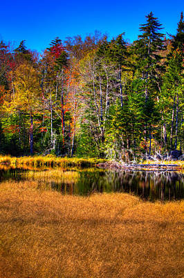 Fir Trees Photograph - Adirondack Color 52 by David Patterson