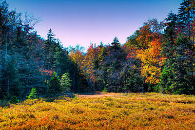 Fir Trees Photograph - A Clearing In The Adirondacks by David Patterson
