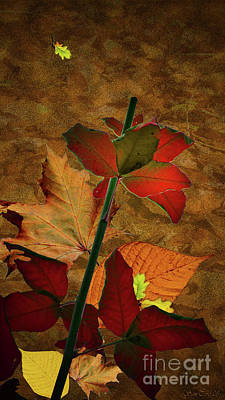 Ornamentally Photograph - Autumn Color by Bruno Santoro