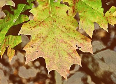 Photograph - Autumn Color Palette by JAMART Photography