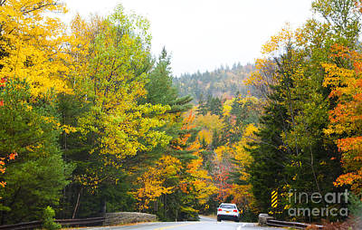 Photograph - Autumn Colors 3990 by Charles  Ridgway