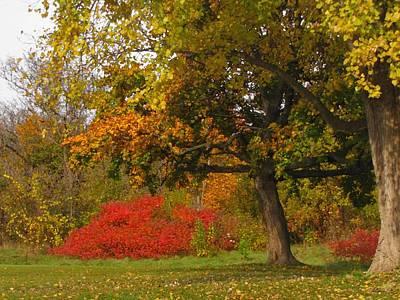 Autumn Colors 6591 Art Print