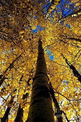 Safari - Autumn Colors 9 by Terry Elniski