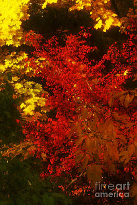 Autumn Colors Art Print by Jeff Breiman