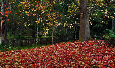 Autumn Colors Art Print by Kaye Menner