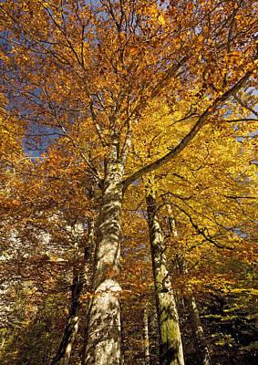 Autumn Colour Art Print by Bob Gibbons