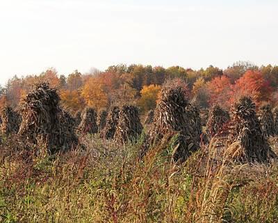 Autumn Corn Art Print by Donna Bosela