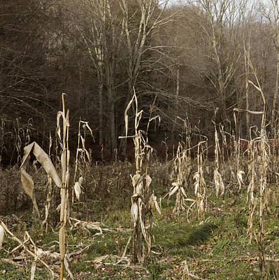 Photograph - Autumn Cornstalks by John Stephens