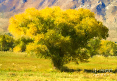 Autumn Cottonwood Art Print