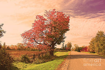 Photograph - Autumn Country by Cathy Beharriell