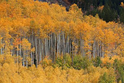 Art Print featuring the photograph Autumn Curtain by Jim Garrison