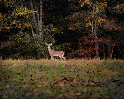 Photograph - Autumn Deer 2 by Jai Johnson