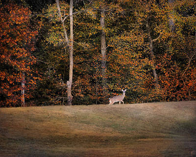 Photograph - Autumn Deer by Jai Johnson