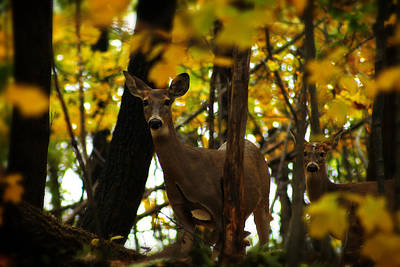 Photograph - Autumn Doe by Scott Hovind