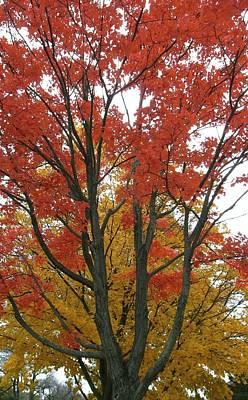 Autumn Duel Print by Todd Sherlock