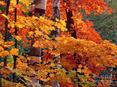 Photograph - Autumn Fair 2 by France Laliberte