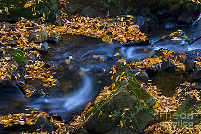 Photograph - Autumn Falls - 40 by Paul W Faust -  Impressions of Light