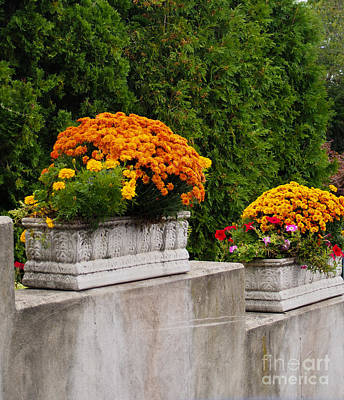 Stone Trough Photograph - Autumn Flowers by Anne Boyes