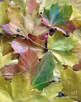 Photograph - Autumn Foliage by Ausra Huntington nee Paulauskaite