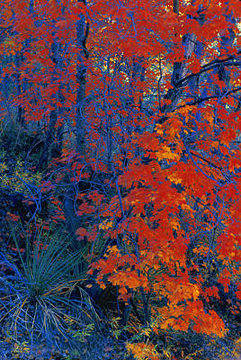 Autumn Foliage Art Print by Don Hammond
