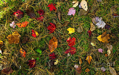 Pine Needles Photograph - Autumn Forest Floor by Matt Tilghman