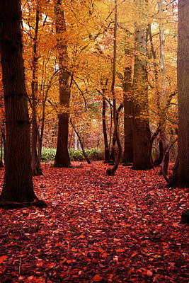 Photograph - Autumn Forest In South East England by Ethiriel  Photography