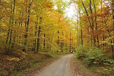 Photograph - Autumn Forest by Matthias Hauser