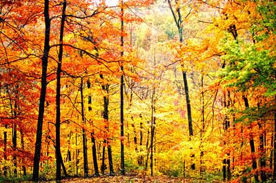 Art Print featuring the photograph Autumn Forest by Randall Branham