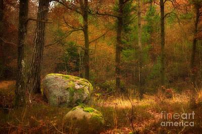 Baar Photograph - Autumn Forest Walk by Lutz Baar