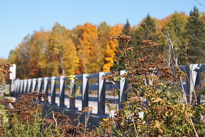Photograph - Autumn From The Roadside by Ron Read