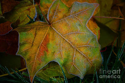 Photograph - Autumn Frost 2 by Tara Turner