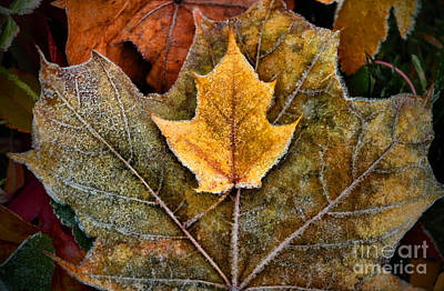 Photograph - Autumn Frost by Tara Turner