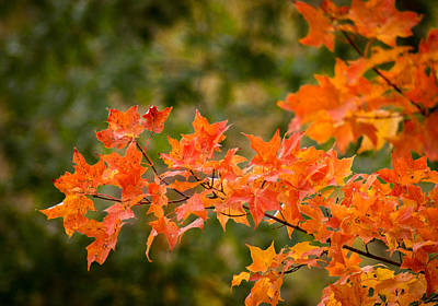 Photograph - Autumn Glory by Bill Pevlor