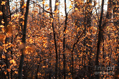 Autumn Glory Art Print by Chris Hill