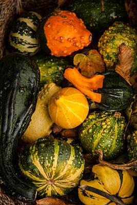 Autumn Gourds Collage Print by Matt Dobson