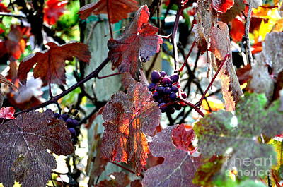Autumn Photograph - Autumn Grapes by Tanya  Searcy