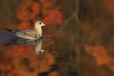 Autumn Gull Art Print by Karol Livote