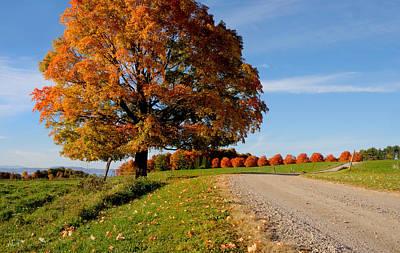 October Photograph - Autumn Gumdrops by April Bielefeldt